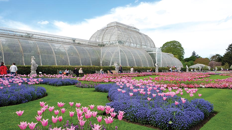 Beautiful Autumn Flowers, Kew Gardens And RHS Wisley Flower Show